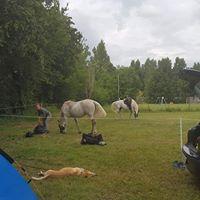 Venez en famille et avec vos animaux : ânes, chevaux,...